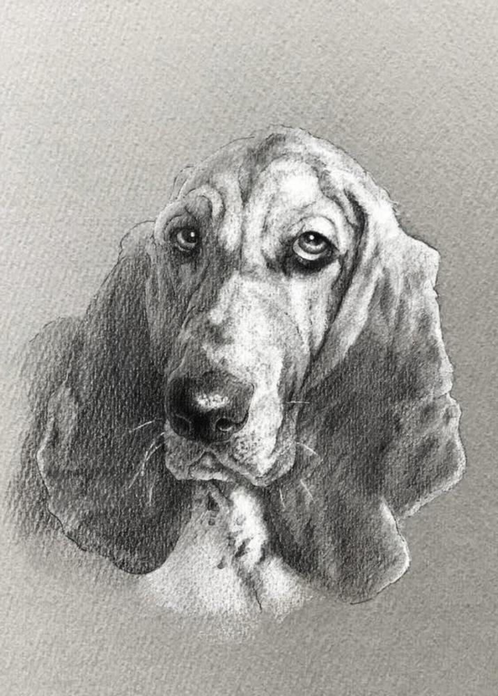 モノクロパステルで描くバセットハウンドのペットアート。