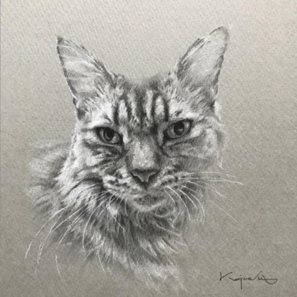顰みを凝らす猫