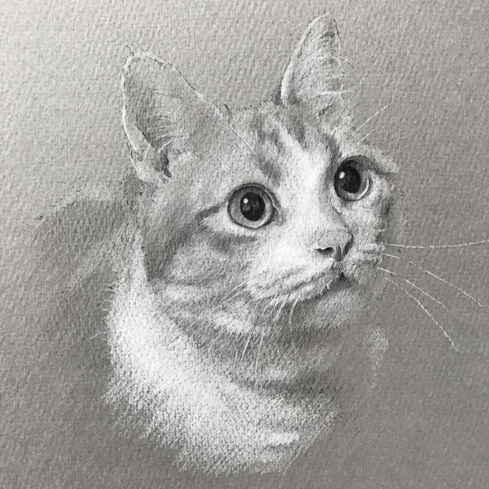 モノクロパステルで描いたマンチカンのペットアート。