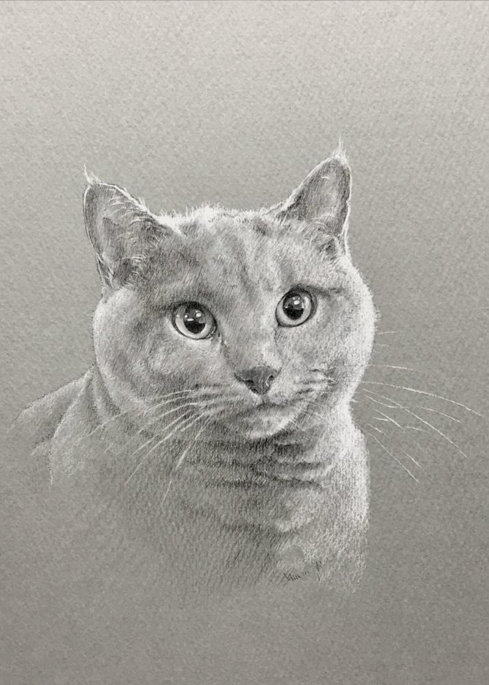 ロシアンブルーをモノクロパステルで描いたペットアート作品。