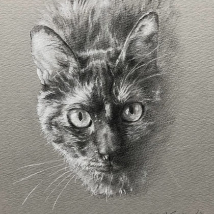 見上げる錆猫