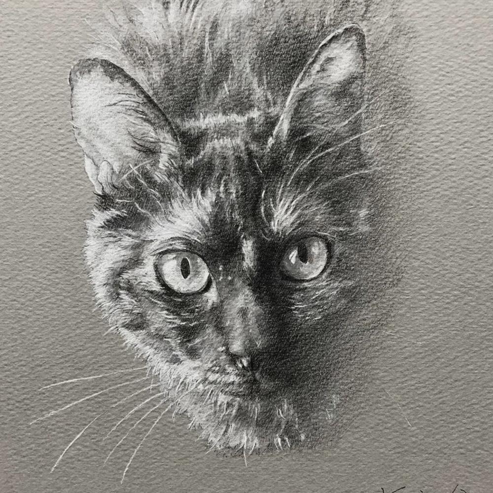 見上げる錆猫のペットアート