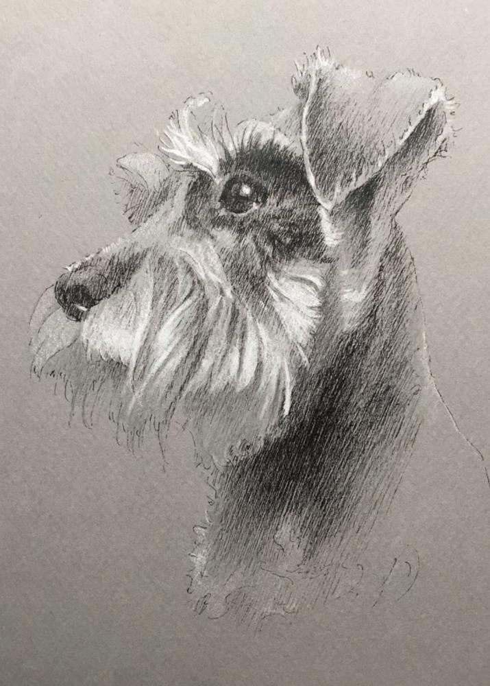 ペットアートで描いた髭犬ことシュナイザー