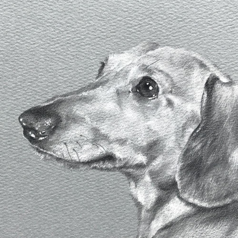ペットの似顔絵の特徴をわかりやすくするために部分拡大。