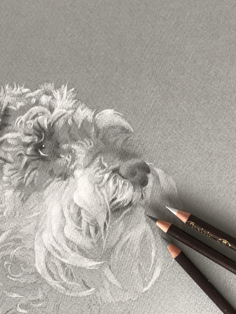 モジャモジャな髭犬