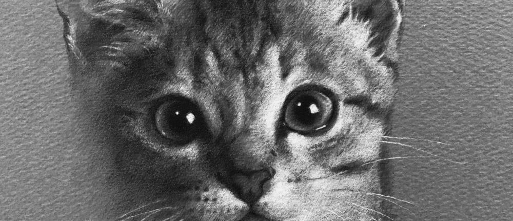 モノクロ・ペットアートの子猫