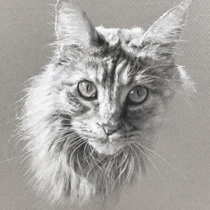 モノクロペットアートの猫の画像ノルウェィ