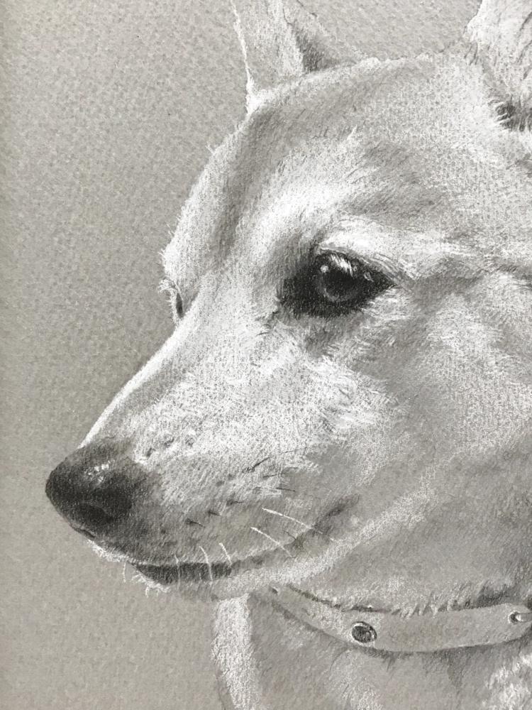 モノクロペットイラストの芝犬のアップ画像。行間を読むような気持ちで描く香川かづあきの作画方法の説明。