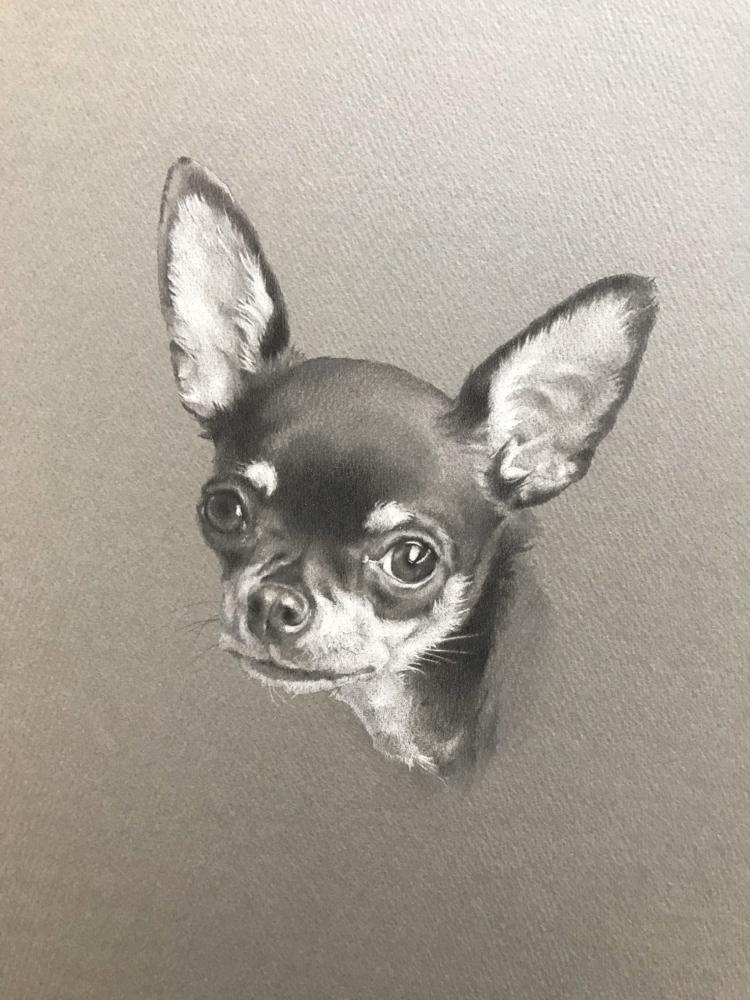 ペットの似顔絵イラストレーション「オレオ」